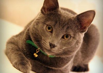 cat-1250721_1280