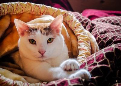 cat-1513184_1280