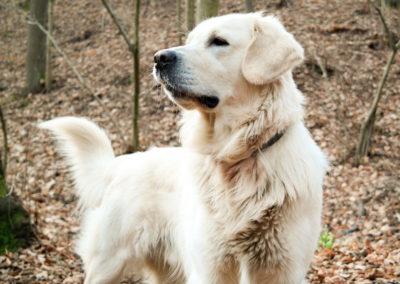 dog-1119755_1920