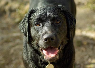 dog-657581_1920